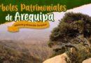 Arequipa busca sus árboles patrimoniales para protegerlos, conservarlos y generar turismo
