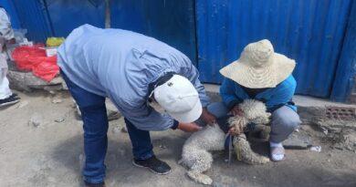 Realizarán campaña de vacunación canina en Sachaca