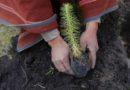 Anuncian siembra de 5,500 árboles en 22 ciudades para mitigar el cambio climático