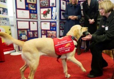Coronavirus: investigadores entrenarán a perros para detectar el COVID-19
