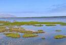 Conoce ocho razones primordiales para conservar los humedales del Perú